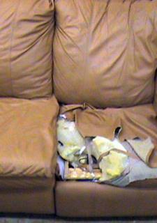 BEFORE   Beige Leather Couch Reupholstering   Reupholster This Side Of A  Sectional Couch. This